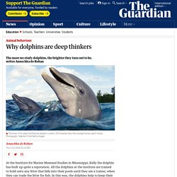 Why dolphins are deep thinkers
