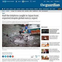 Half the dolphins caught in Japan hunt exported despite global outcry: report