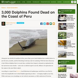 3,000 Dolphins Found Dead on the Coast of Peru