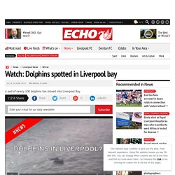 Watch: Dolphins spotted in Liverpool bay