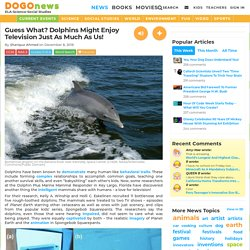 Guess What? Dolphins Might Enjoy Television Just As Much As Us! Kids News Article
