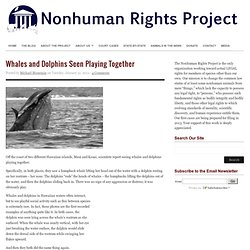 Whales and Dolphins Seen Playing Together : The Nonhuman Rights Project