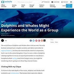Dolphins and Whales Might Experience the World as a Group