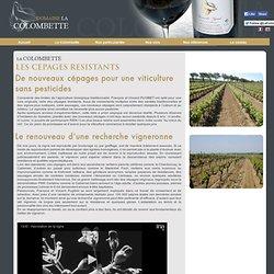 Domaine la Colombette : CéPAGES RéSISTANTS
