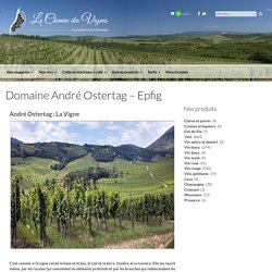 Domaine André Ostertag - Epfig - Le Chemin des Vignes