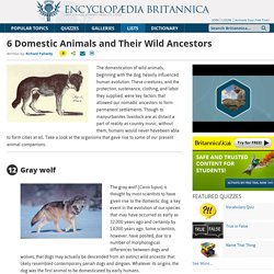 6 Domestic Animals and Their Wild Ancestors