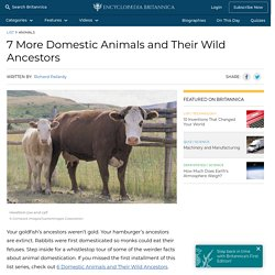 7 More Domestic Animals and Their Wild Ancestors