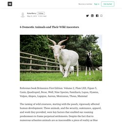6 Domestic Animals and Their Wild Ancestors - RobertBerry - Medium