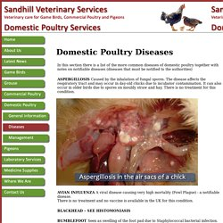 Domestic Poultry Diseases