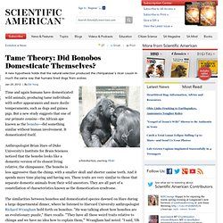 Tame Theory: Did Bonobos Domesticate Themselves?