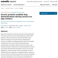 Excess protein enabled dog domestication during severe Ice Age winters