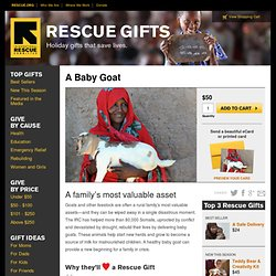 Donate a Goat This Holiday Season| IRC Goat Gifts