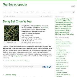 Dong Bai Chun Ya tea