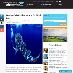 Donsol: Whale Sharks And So Much More