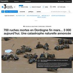 700 ruches mortes en Dordogne fin mars... 3 000 aujourd'hui. Une catastrophe naturelle annoncée