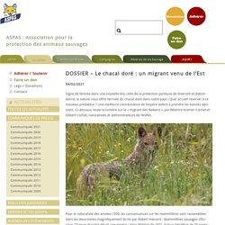 4 fév. 2021 DOSSIER - Le chacal doré : un migrant venu de l'Est