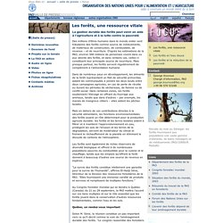 Dossier - Les forêts, une ressource vitale