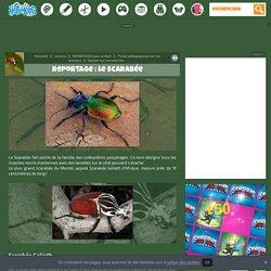 Dossier sur les insectes - Le scarabée