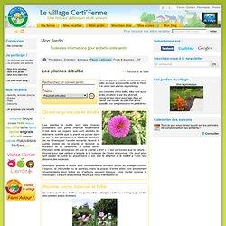 Dossier jardinage CertiFerme : Les plantes à bulbe