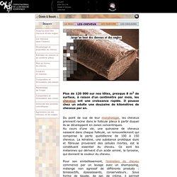 Dossier STechnique de la coiffure 30 pages;sagaScience - Chimie et Beauté
