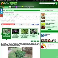 De l'utilité des orties pour la biodiversité