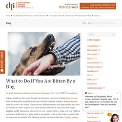 What to Do If You Are Bitten By a Dog