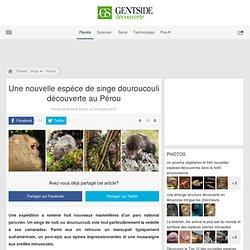 Photos - Une nouvelle espèce de singe douroucouli découverte au Pérou