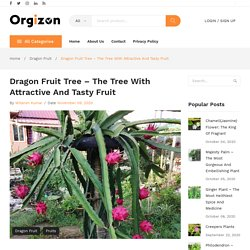 Dragon Fruit Tree - The Tree with Attractive and Tasty Fruit