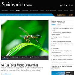 14 Fun Facts About Dragonflies