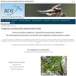 Dragonfly Society