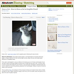Draw a Cat - How to Draw a Cat in Graphite Pencil