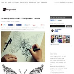Little Wings, Ornate Insect Drawings by Alex Konahin