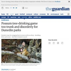 Possum tree-drinking game too trunk and disorderly for Dunedin parks | World news