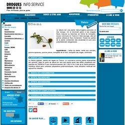 Datura - Drogues info service : information, aide sur drogues alcool…