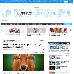 Droit des animaux : pourquoi ça coince en France