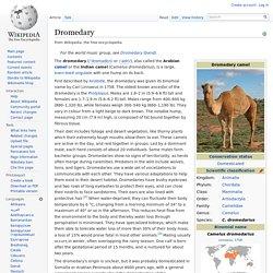 WIKIPEDIA – Dromedary.