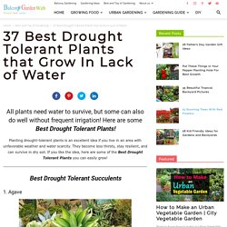 Best Drought Tolerant Flowers and Plants
