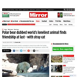 Polar bear dubbed world's loneliest animal finds friendship at last - with stray cat