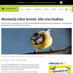 Bygg till exempel en dubbelholk och minska fåglarnas bostadsbrist.