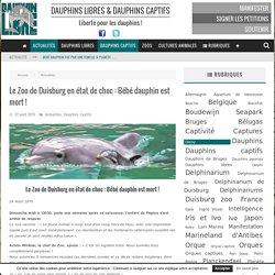 Le Zoo de Duisburg en état de choc : Bébé dauphin est mort ! - Dauphinlibre.be