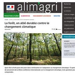 La forêt, un allié durable contre le changement climatique