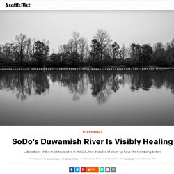 SoDo's Duwamish River Is Visibly Healing