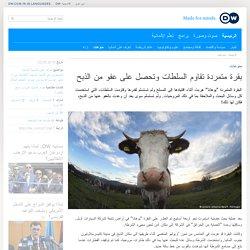منوعات- بقرة متمردة تقاوم السلطات وتحصل على عفو من الذبح