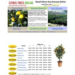 Dwarf Citrus Patio Trees Online