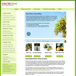 Buy Dwarf Citrus Trees For Less | Citrus Trees Online