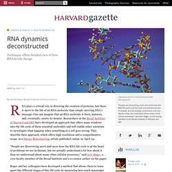 RNA dynamics deconstructed