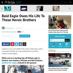 Bald Eagle Owes His Life To These Heroic Brothers
