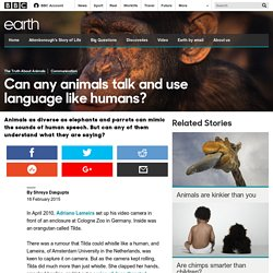 Earth - Can any animals talk and use language like humans?