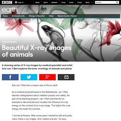 Earth - Beautiful X-ray images of animals