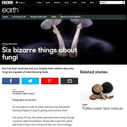 Earth - Six bizarre things about fungi